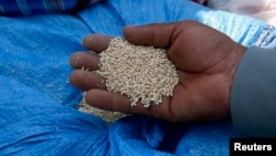 A man holds quinoa grains at a marketplace for small- and medium-sized quinoa growers in Challapata, Oruro Department, south of La Paz, Bolivia, April 19, 2014.