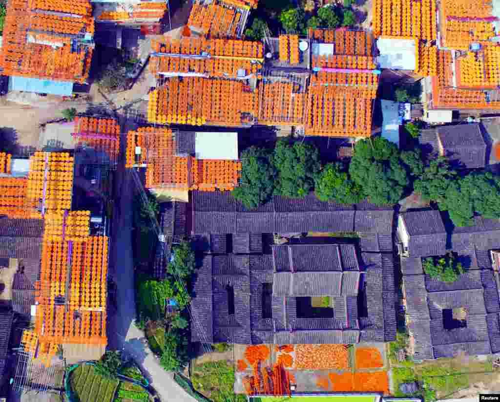 خشک کردن هزاران خرمالو بر روی پشت بامهای شهر کوانژو چین.