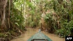 ساختن هتل های جنگلی در آمازون