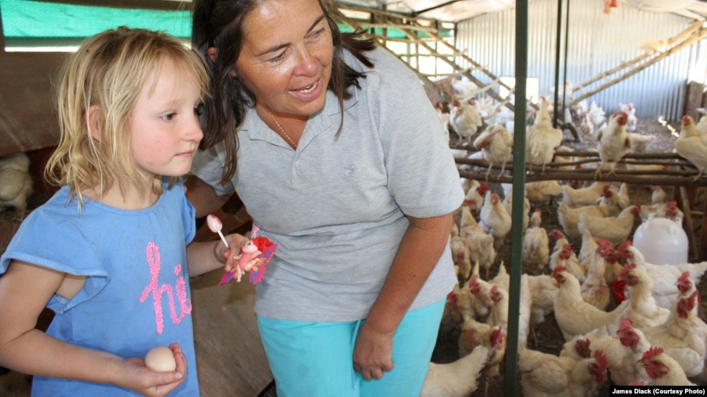 Farmer Ruth Mylroie watches a chicken laying an egg with a young visitor during a school tour of New Harmony Farm. This farm is known for its humane treatment of its chickens.