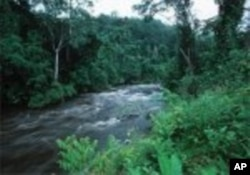 Forêt tropicale du Gabon