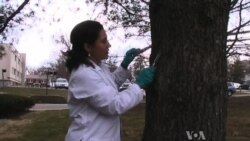 Tree Bark Shows Global Spread of Toxic Chemicals
