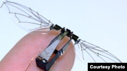 With a tiny carbon fiber body and wings made of thin plastic sheets, this robotic fly was inspired by the way real insects move. The wings are controlled by a minuscule flight muscle or 'actuator' that drives wing movement when a voltage is applied. (By the Wood lab)
