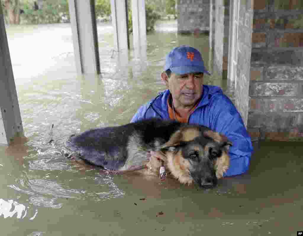 Джо Гарсия, житель городка Спринг в штате Техас, помогает своей овчарке Хейди, спасаясь из затопленного дома, 28 августа 2017 (AP Photo/David J. Phillip)
