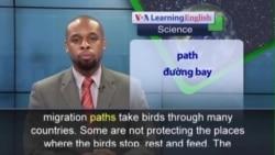 Phát âm chuẩn - Anh ngữ đặc biệt: Migrating Birds (VOA)