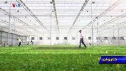 کاروان: افزایش تولید محصولات در فارم های مجهز با تکنالوژی