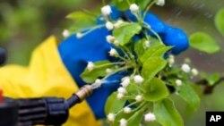 ยาฆ่าแมลงโรคพืช มีผลต่อการเป็นโรคสมาธิสั้นในหมู่เด็กอย่างไร?