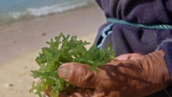 Quiz - The Health Benefits of Seaweed