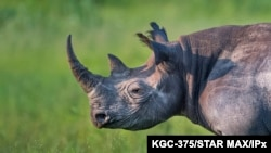 FILE - A surge in rhinoceros poaching has led to some in Botswana to ask that game rangers be armed.