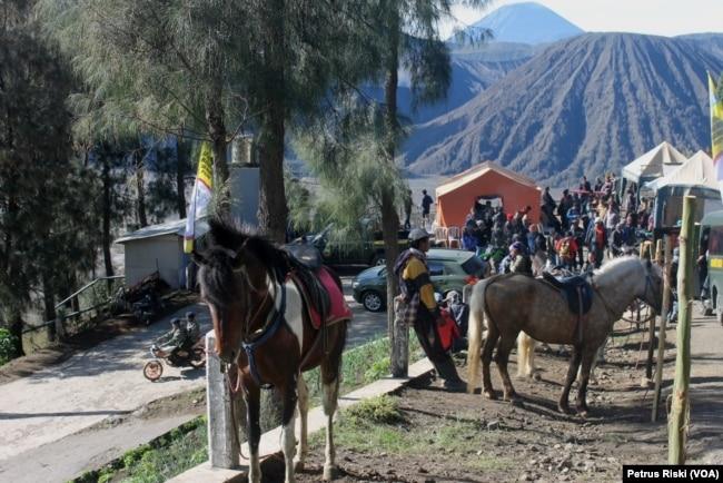 Sejumlah kuda tertambat siap mengantar pengunjung mengelilingi sejumlah obyek wisata di Gunung Bromo, Jawa Timur. (Foto: VOA/Petrus Riski)