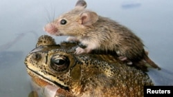 Scientists say one-third of the world's animals could lose more than half their climatic range.
