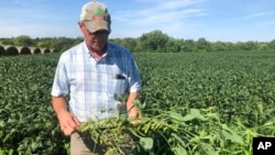 2019年8月22日農民米勒展示大豆。