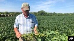愛奧華州的一位農民在農場裡展示他種植的大豆。 (2019年8月22日)