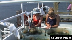 Students measure ecosystem production in an estuary. (Emmett Duffy)
