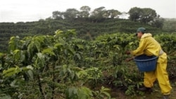 Supporting Growth In Central America