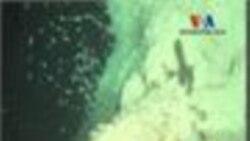 Araştırmacılar Denizaltı Volkanlarında Ne Buldu?