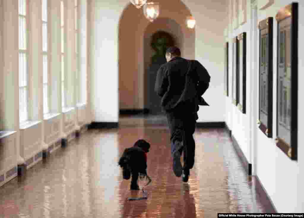 Le chien Bo a conquéri le coeur des Obama, le 15 mars 2009. (White House/Pete Souza)