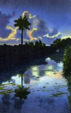 The Everglades at dusk