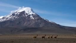 Kawanan llamas tampak berjalan di padang rumput di depan Gunung tertinggi di Ekuador, Chimborazo, dalam foto yang diambil pada 18 Juli 2014. Sekelompok pendaki pada akhir Oktober 2021 terjebak dalam longsoran salju saat berusaha mendaki gunung tersebut.