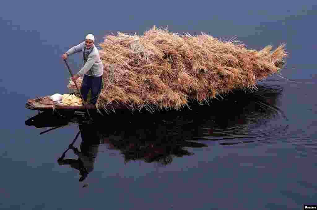 Hindistan'da Nageen Gölü'nde bir adam, sandalıyla kamış taşıyor.