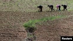지난해 6월 북한 평안북도 삭주군 압록강변에서 북한 주민들이 밭일을 하고 있다. 강 건너 중국 쪽에서 촬영한 사진이다. (자료사진)