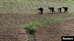 지난 20일 북한 평안북도 삭주군 압록강변에서 북한 주민들이 밭일을 하고 있다. 압록강 건너 중국 측에서 촬영한 사진이다. (자료사진)