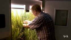 Rising Greenhouse Gases Making Food Less Nutritious