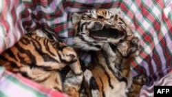 Kulit harimau Sumatra yang diperlihatkan dalam konferensi pers oleh polisi di Medan, Sumatra Utara, 31 Januari 2019. (Foto: AFP)