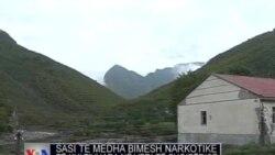 Zbulohen bimë narkotike në veri të Shqipërisë