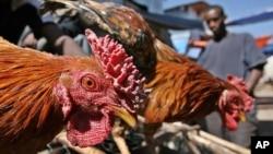 Pedagang ayam di pasar Chola, Addis Ababa. (Foto: dok). Para peternak di Ethiopia terpaksa memusnahkan ratusan ribu anak ayam, akibat merosotnya permintaan unggas, dampak pandemi Covid-19.