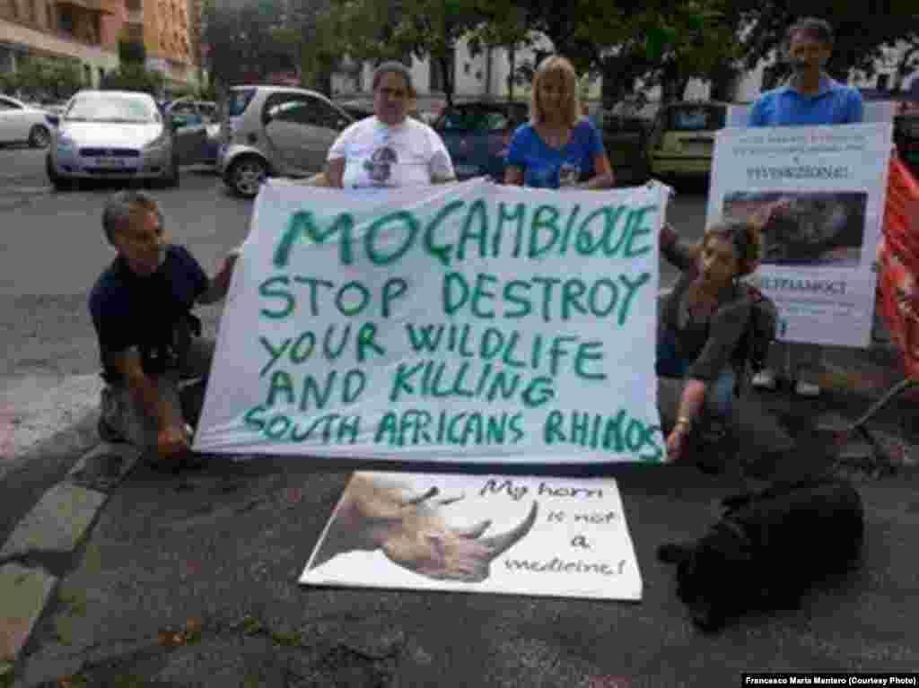 Moçambique: Pára de destruir a tua vida selvagem e de matar os rinocerontes sul-africanos.
