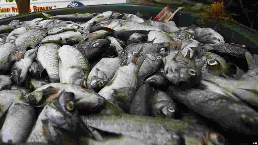 """Việt Nam bác tin 'cá chết vì bị đầu độc' ở Lý Sơn Chính quyền huyện Lý Sơn (Quảng Ngãi) nói thông tin """"cá chết hàng loạt do bị đầu độc"""" xuất hiện trên mạng xã hội là """"bịa đặt"""". Báo chí trong nước dẫn lời ông Nguyễn Thành Phát, Phó trưởng Công an huyện Lý Sơn, cho biết """"đã đi điều tra"""" và """"không có chuyện cá chết ở Lý Sơn là do bị đầu độc"""". Ông Phát nói cá chết ở Lý Sơn là do """"trời nắng nóng và có dòng nước nóng của hải lưu đi qua các lồng bè, gây cá chết hàng loạt""""."""
