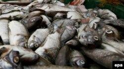 """Việt Nam mới đây cho biết rằng đã """"xác định được nguyên nhân cá chết"""" gây tác động tới người dân ở một loạt các tỉnh miền Trung, nhưng """"chưa thể công bố""""."""