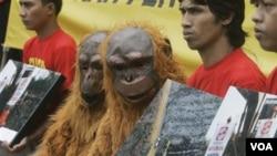 Aktivis Greenpeace yang mengenakan kostum orangutan berdemonstrasi di Kementrian Kehutanan, Jakarta (foto: dok).