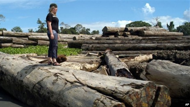 A pile of logs at a logging operation camp along the coast of Papua province, Indonesia (2006 file photo)