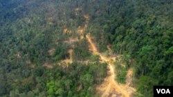 Foto udara hutan di Kalimantan Timur (foto: dok).