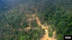 Foto udara hutan di Kalimantan Timur (foto: dok). Greenpeace mengatakan pemerintah harus mereview konsesi-konsesi jika menargetkan 45 persen Kalimantan sebagai paru-paru dunia.