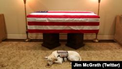 «سالی» سگ کمکی بوش فقید، رئیس جمهور پیشین آمریکا، تا لحظه آخر به او وفادار باقی ماند. Courtesy of Jim McGrath via Twitter