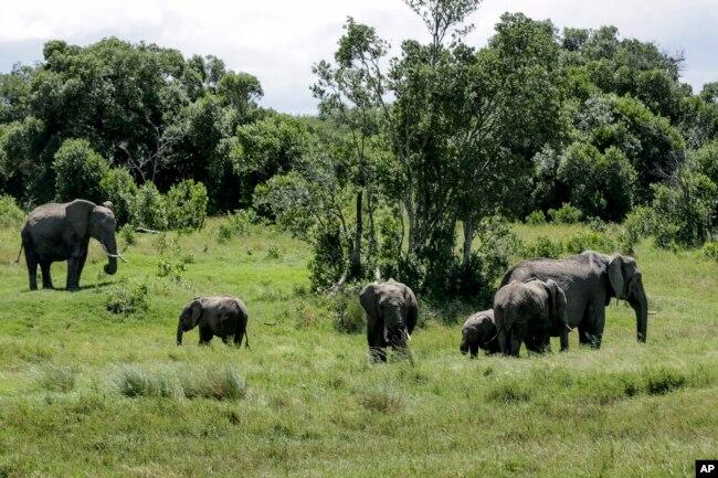 کیمرون میں ہاتھیوں کی تعداد کا اندازہ ساڑھے چھ ہزار ہے۔