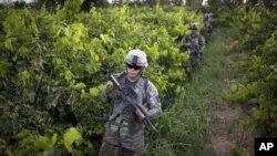 امریکی فوجی ضلع ارغنداب میں گشت کے دوران انگور کے ایک باغ سے گزر رہے ہیں۔ (فائل فوٹو)