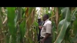 Zimbabwean Academics Take on Farming in South Africa