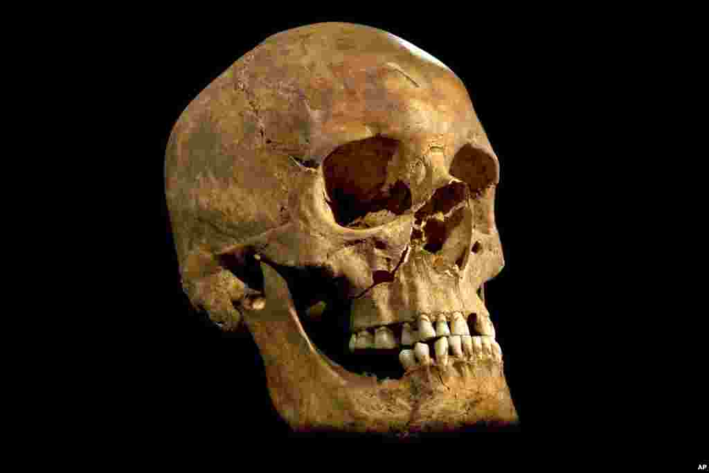 A photo made available by the University of Leicester of the skull found at the Grey Friars excavation in Leicester, Britain.