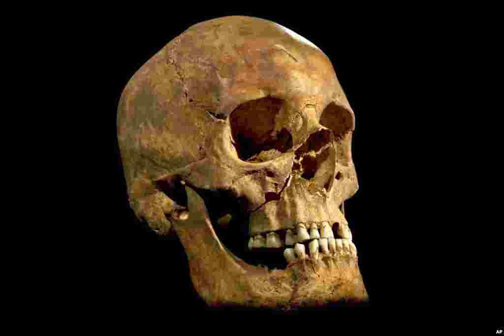 Một bức ảnh do trường Đại học Leicester cung cấp cho thấy xương sọ được tìm thấy tại Leicester, Anh.