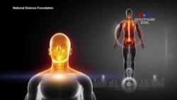 ԲԱՐԻ ԼՈՒՅՍ. Արամ Ավետիսյանը՝ քաղցկեղի դեմ պայքարի նոր մեթոդի մասին
