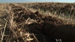 Life in Soil Impacts Life Above Ground
