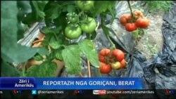 Reportazh nga Goriçani, Berat