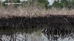 Shell Accused of Failing to Clean Up Nigeria Oil Spills