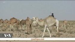 Portrait d'un éleveur de chameaux au Maroc
