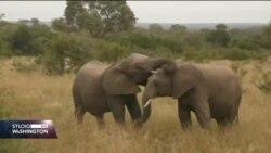 Napredna tehnologija štiti ugrožene vrste