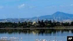 Flamingos standing in a salt lake in front of the Hala Sultan Tekke Mosque which was built between 1760 and 1796 in southern coastal city of Larnaca, in this eastern Mediterranean island of Cyprus.